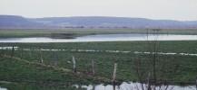 Zone humide protégée par le Conservatoire du littoral dans l'Estuaire de la Seine